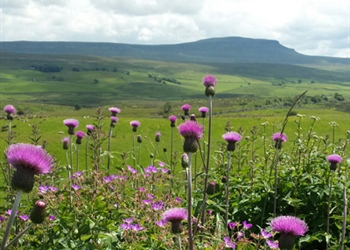 Wildflowers of the Dales