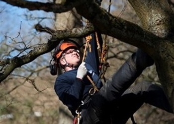 Tree climbing and rescue (CS38)